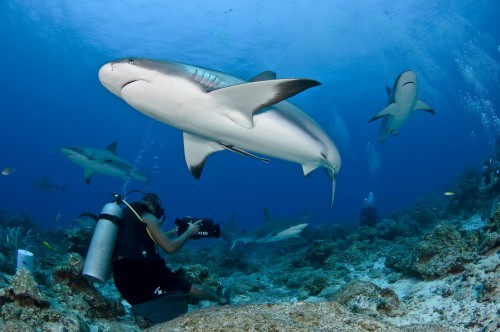 the best marine park in the world Selat Pantar